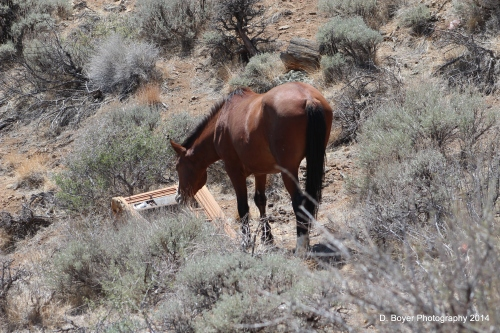 Wild Horse Virginia Range Nevada