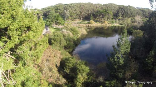 Aerial shot North Lake Golden Gate Park